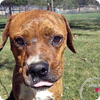 Adopt A Pet :: Ginger - Sidney, OH