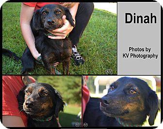 Dachshund Mix Dog for adoption in Sautee, Georgia - Dinah