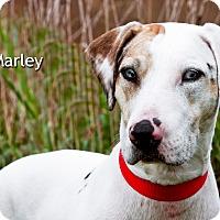 Adopt A Pet :: Marley - Lisbon, IA