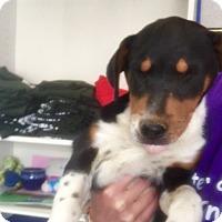 Adopt A Pet :: Fern - Visalia, CA