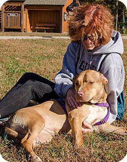 Labrador Retriever Mix Dog for adoption in Midlothian, Virginia - Lola