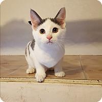 Adopt A Pet :: Porkchop - Fairmont, WV
