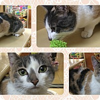 Adopt A Pet :: Tina - Okotoks, AB