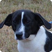 Adopt A Pet :: Trent - Jackson, GA