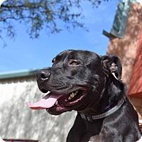 Adopt A Pet :: Titan - Sierra Vista, AZ