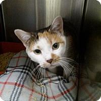 Adopt A Pet :: Trixy - Northfield, OH