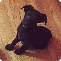 Adopt A Pet :: Shiloh - Denver, CO