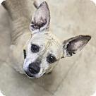 Adopt A Pet :: Bailey 6