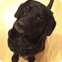 Adopt A Pet :: Grace - Joliet, IL