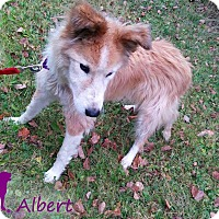 Adopt A Pet :: Albert - Ottawa, ON