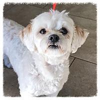 Adopt A Pet :: Beckett - Los Alamitos, CA