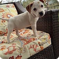 Adopt A Pet :: Paulette - Jacksonville, FL