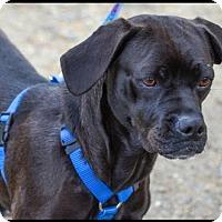 Adopt A Pet :: Dottie - Brick, NJ