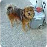 Adopt A Pet :: Picachoo - Marina del Rey, CA