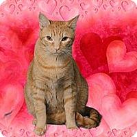 Adopt A Pet :: Tuck - Chesapeake, VA