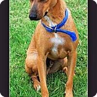 Adopt A Pet :: Prince - Eddy, TX