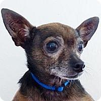 Adopt A Pet :: Jose - S. Pasedena, FL