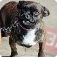 Adopt A Pet :: Ashley - Justin, TX