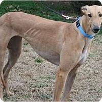 Adopt A Pet :: Jackie - Smyrna, TN