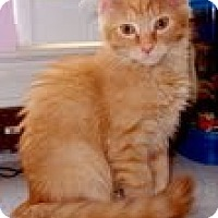 Adopt A Pet :: Sage - Arlington, VA