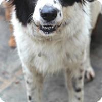 Adopt A Pet :: Belle - Norwalk, CT