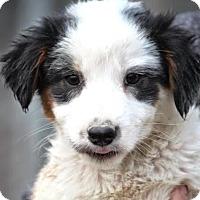 Adopt A Pet :: *Conway - PENDING - Westport, CT
