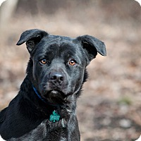 Adopt A Pet :: Black Jack - Lewisville, IN