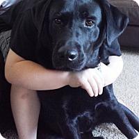 Adopt A Pet :: Finn - Cincinnati, OH