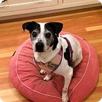 Adopt A Pet :: Flicka - Sudbury, MA