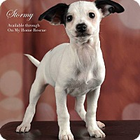 Adopt A Pet :: Stormy - Henderson, NV