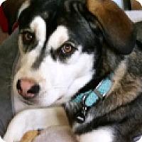 Adopt A Pet :: Ringo - Durham, NC