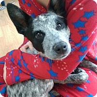 Adopt A Pet :: Kenya - Ogden, UT