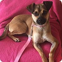 Adopt A Pet :: Annie - Encino, CA