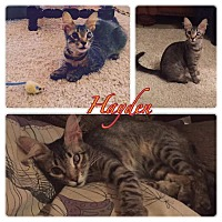 Adopt A Pet :: Hayden - Scottsdale, AZ