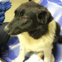 Adopt A Pet :: Lally - Brattleboro, VT