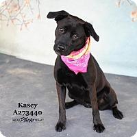 Adopt A Pet :: KASEY - Conroe, TX