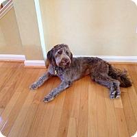 Adopt A Pet :: Penny - Fredericksburg, VA