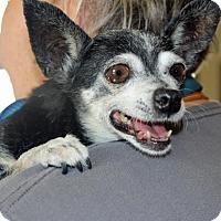 Adopt A Pet :: Penelope - Palm Springs, CA
