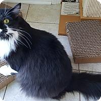 Adopt A Pet :: evony - brewerton, NY