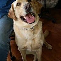 Adopt A Pet :: Ruffus - Minnetonka, MN