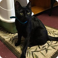 Adopt A Pet :: Midnight - Bridgewater, NJ