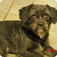 Adopt A Pet :: Buddy (10 lb) Sweetie Pie - Williamsport, MD