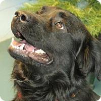 Adopt A Pet :: Spock - Waynesboro, PA