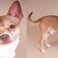 Adopt A Pet :: Marty - Chicago, IL