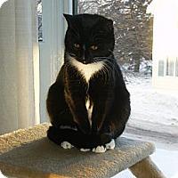 Adopt A Pet :: Jasmine - Douglas, ON
