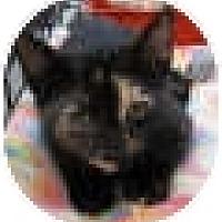 Adopt A Pet :: Nutmeg - Harrisburg, NC