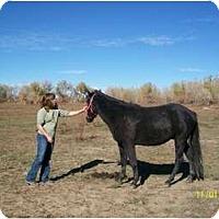 Adopt A Pet :: Dreamer - Pueblo, CO