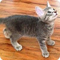 Adopt A Pet :: Mike - Gilbert, AZ