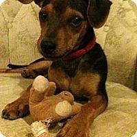 Adopt A Pet :: Sonny - Phoenix, AZ
