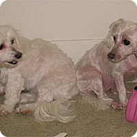 Adopt A Pet :: 2 best gals need you - Sacramento, CA